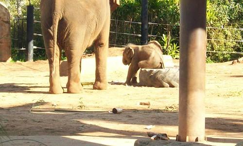 Elephant 1
