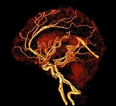 Neuroscience 2009