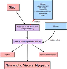 Visceral Myopathy in Statins