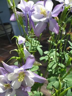 Garten_22.05.11_017_klein