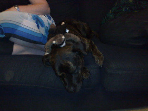 Worn out puppy