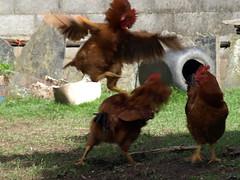 Pollo a lo Matrix