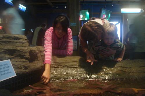觸摸海星海膽