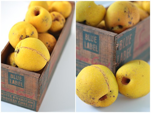 Quince Diptych