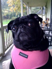 Molly hanging out on her daddy's lap on the big porch.