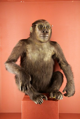 Monkey in glasses, Darwin exhibition, Natural History Museum, Vienna