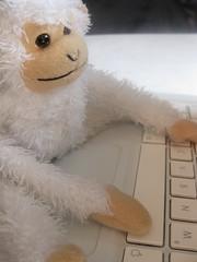 Monkey typing close up
