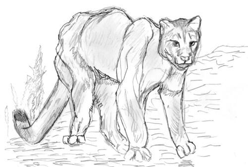 Cougar, part 3