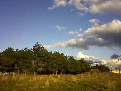 in a flat field