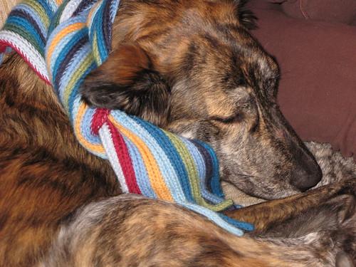 Pekoe scarf