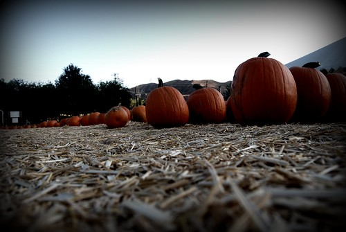 Pumpkin Patch by you.