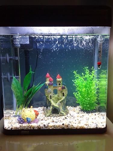 Tom's new fishtank