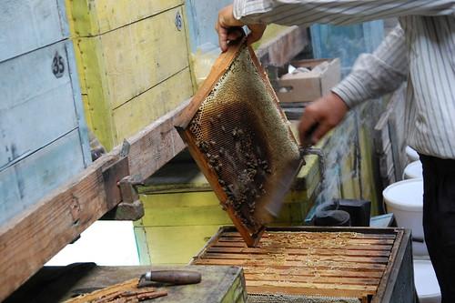 Пчелки стряхиваются