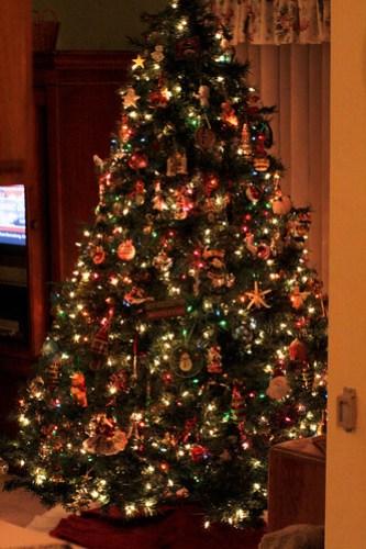 tree1 (1 of 1)-3