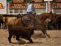 Dancing with Cows - NCHA Futurity