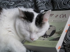 Juno hugging I Am a Cat again