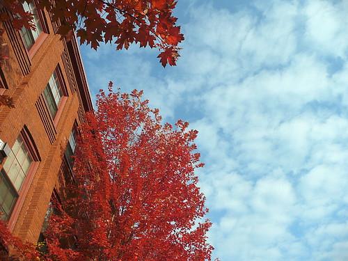 Leaf and sky