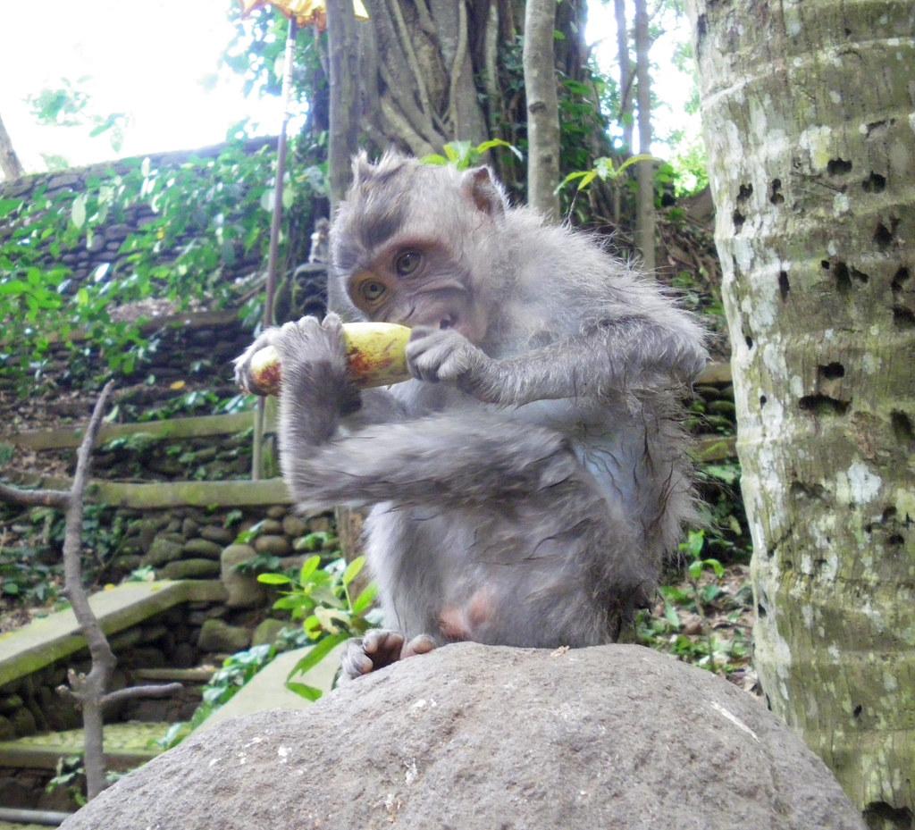 Sacred monkey forest, Bali - IMGP3123