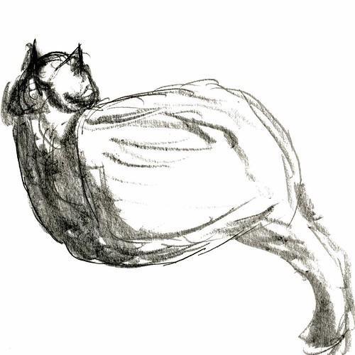 Cats, part 19