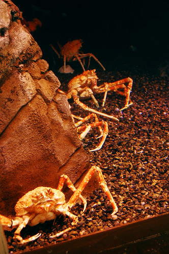 Spiny crabs.