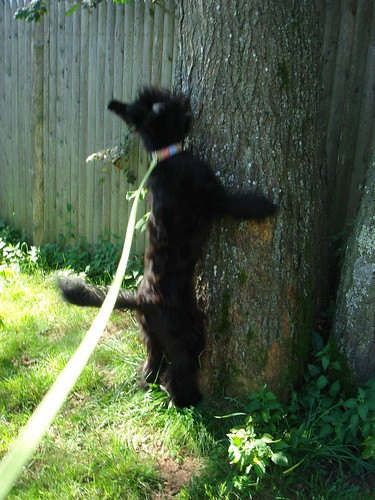 She tries to climb the trees....
