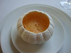 Sea Urchin Cappuccino