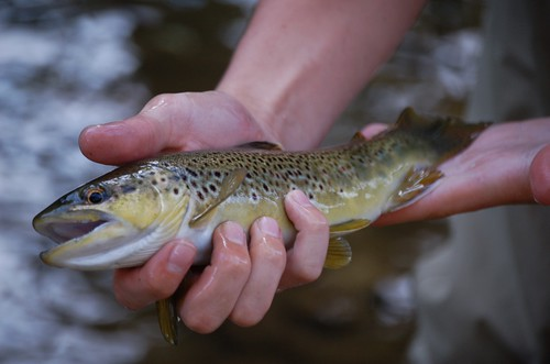 Fall Fly Fishing in Baltimore County, Maryland