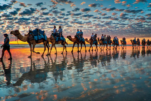 Camels at Sunset,  Cable Beach W.A by Symoto