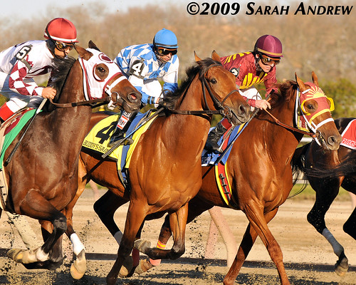 Grand Rapport, Buddy's Saint, and Homeboykris in the Grade 2 Remsen