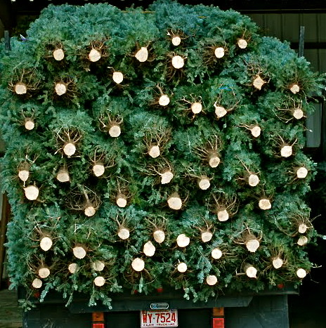 the estate of things chooses west end wreaths