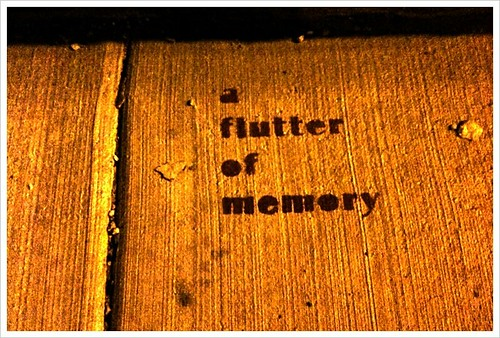 A flutter of memories