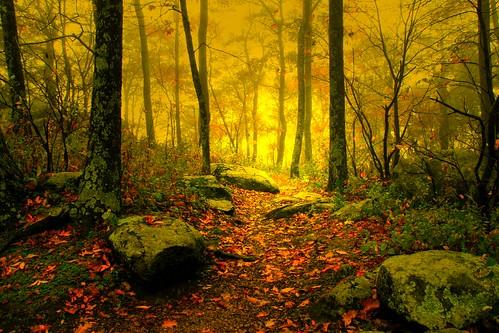Dawn on the Appalachian Trail