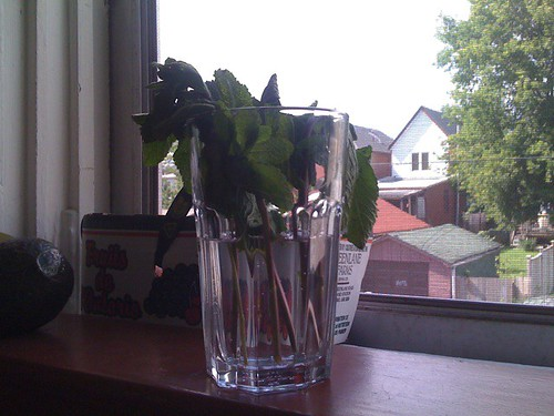 mint in a glass of water