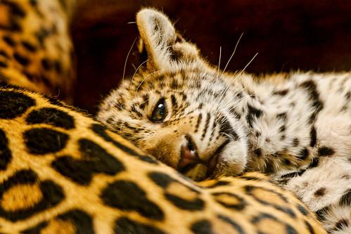 Lying against mom... by Tambako the Jaguar