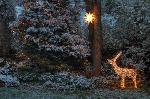 Snow in the backyard