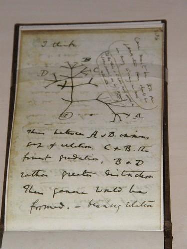 """""""I think..."""" Cuaderno B. El primer árbol filogenético de la historia"""