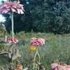 Flowers, New Paltz, NY