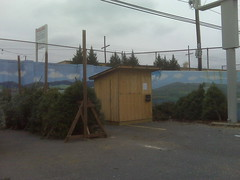 Christmas Tree stand in Crozet