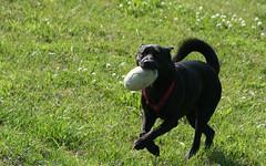 sam running with ball