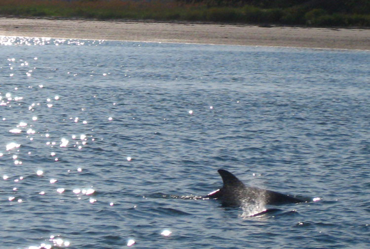 Dolphin Family Blowhole