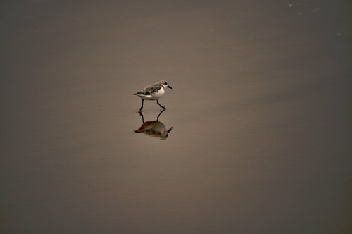 Lownly Tide - 5/365
