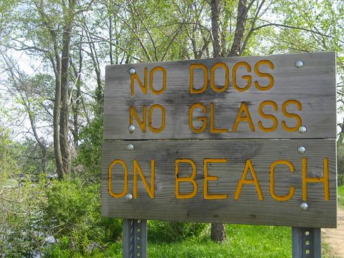 No Dogs No Glass