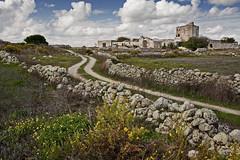 Tipico paesaggio salentino con muretti a secco e antiche masserie