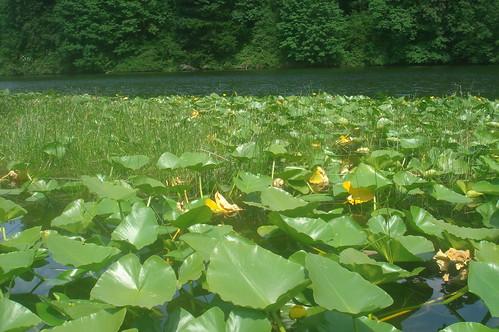 FENWICK LAKE 5
