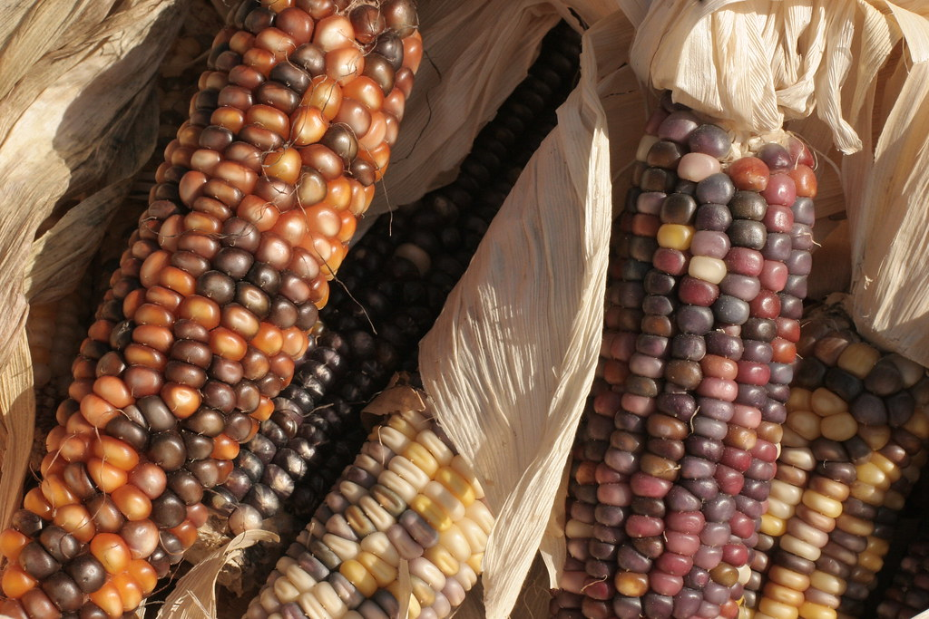 Do they still call this Indian Corn?