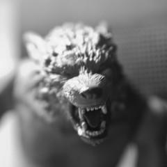 A Very Emo Werewolf