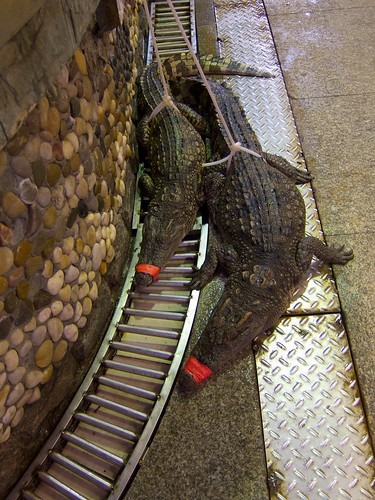 Pity Crocs