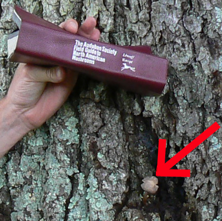 Sinking Creek Mountain - Tony, Mushroom  Book and Mushroom on Keffer Oak (Cropped)