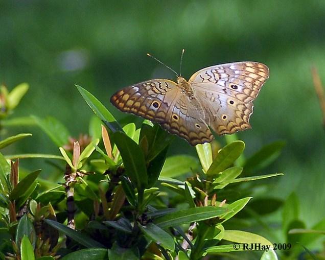 A butterfly on a bush