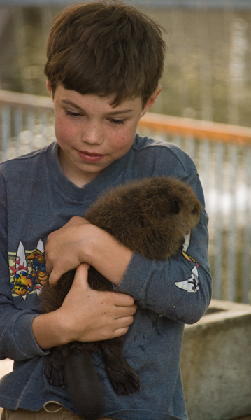 Nothing like a baby beaver to warm the cockles of your heart